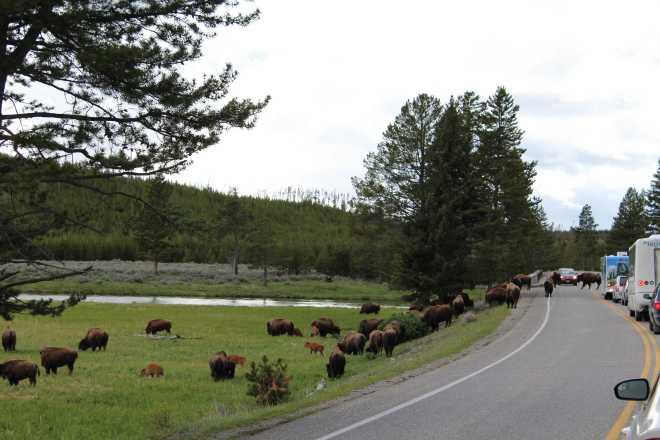 Yellowstone - 4