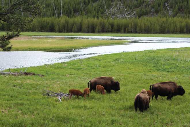 Yellowstone - 5