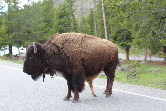 Yellowstone - 6