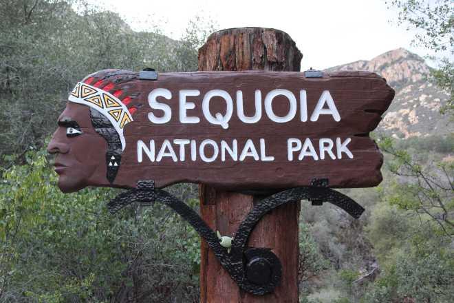 Sequoia - 1