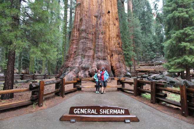 Sequoia - 11