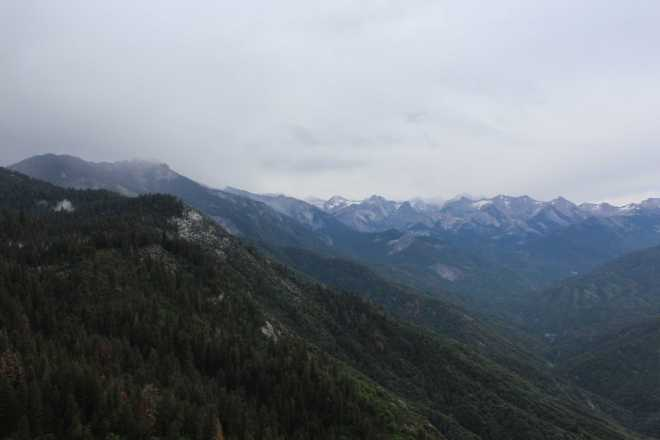Sequoia - 18