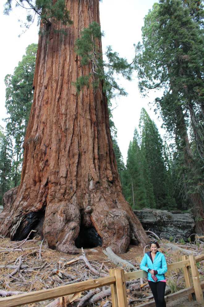 Sequoia - 2