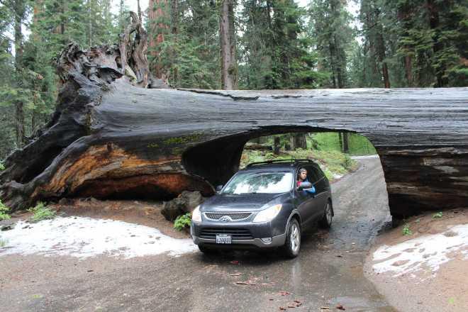 Sequoia - 21