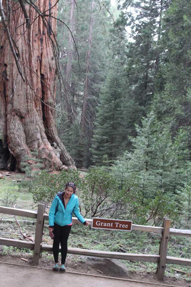 Sequoia - 5