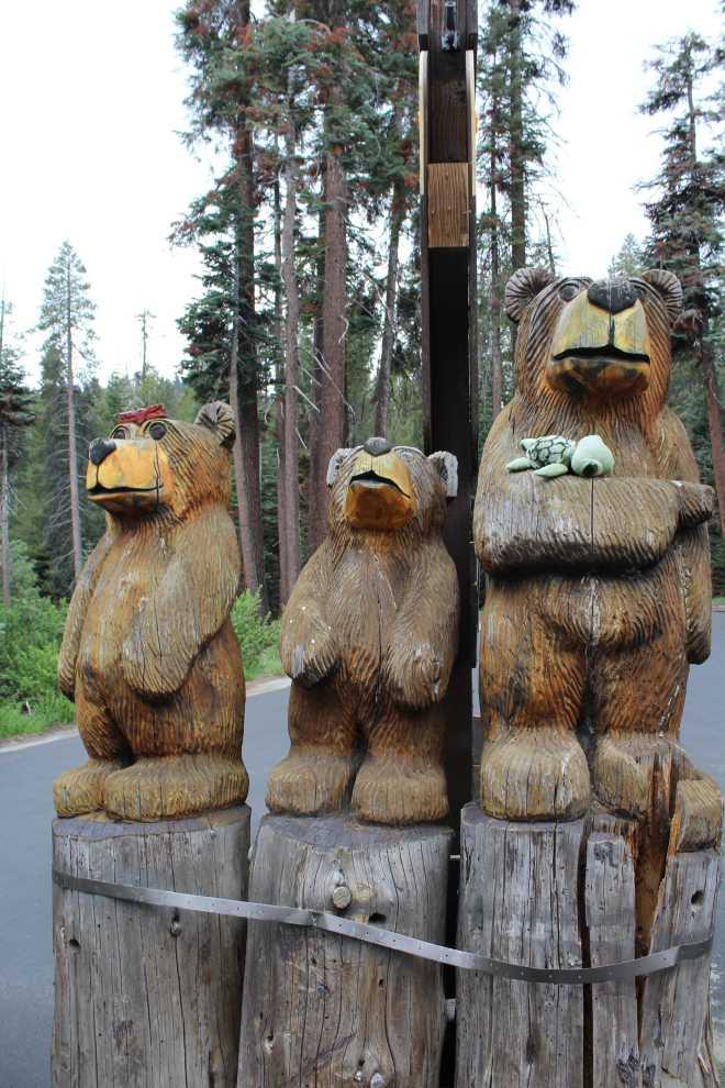 Sequoia - 6