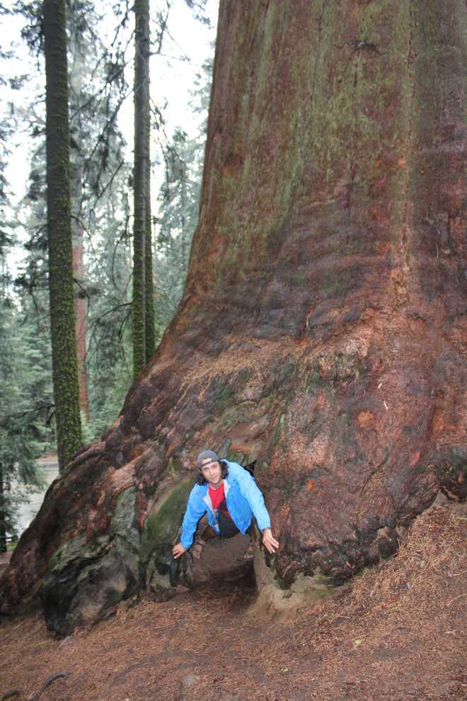 Sequoia - 9