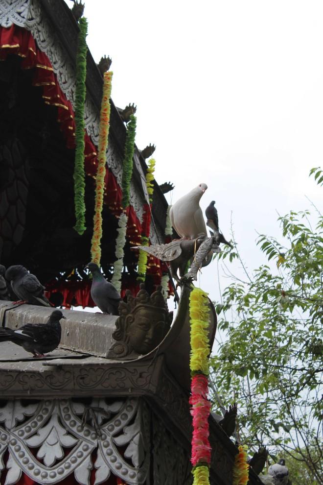 Pokhara - 10