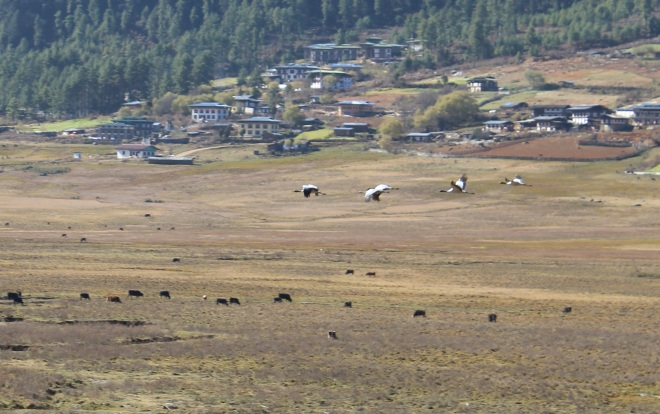 Bhutan, Nov 22 – 8
