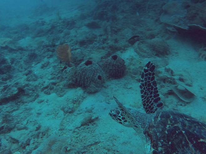 Coron, Shipwreck Diving – 10