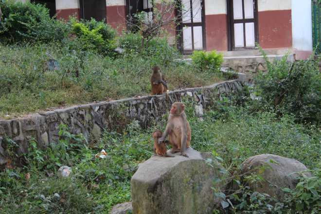 Kathmandu 1, Swayambhunath - 10