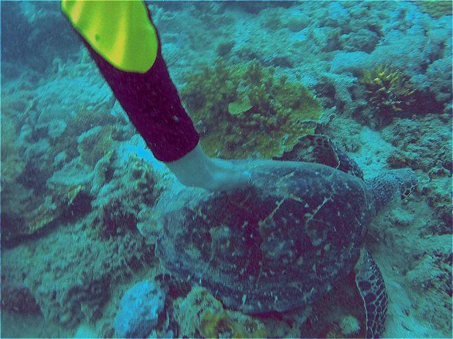 Coron, Shipwreck Diving – 11