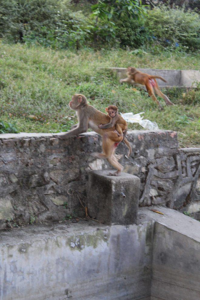 Kathmandu 1, Swayambhunath - 11