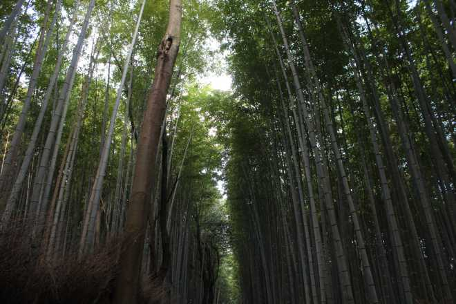 Kyoto, Part 2, Bamboo Forest - 1