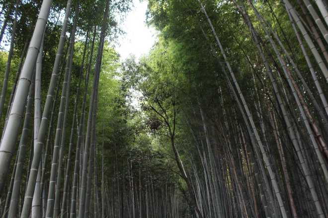 Kyoto, Part 2, Bamboo Forest - 2