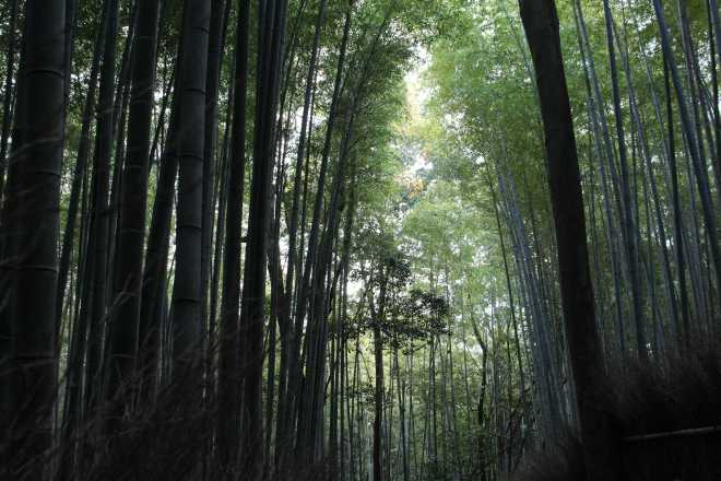 Kyoto, Part 2, Bamboo Forest - 3