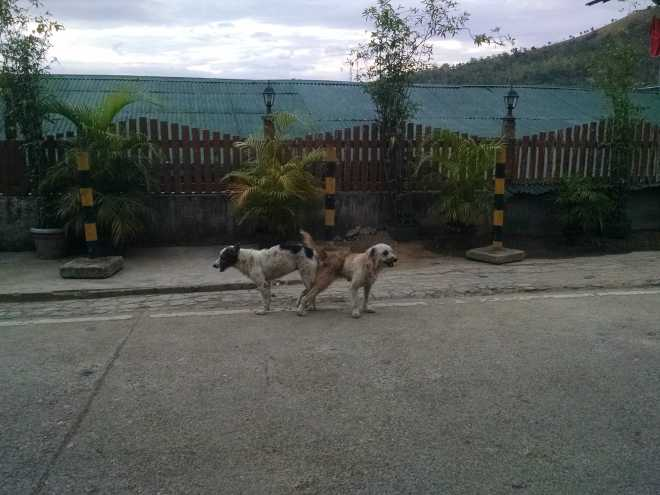 Coron, Island Hopping - 3