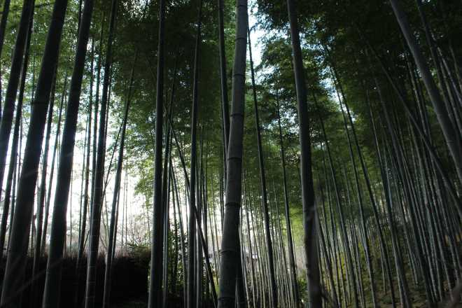 Kyoto, Part 2, Bamboo Forest - 4