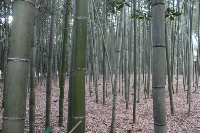 Kyoto, Part 2, Bamboo Forest - 5