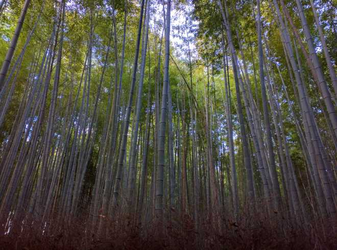 Kyoto, Part 2, Bamboo Forest - 6
