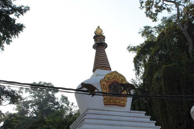 Kathmandu 1, Swayambhunath - 6