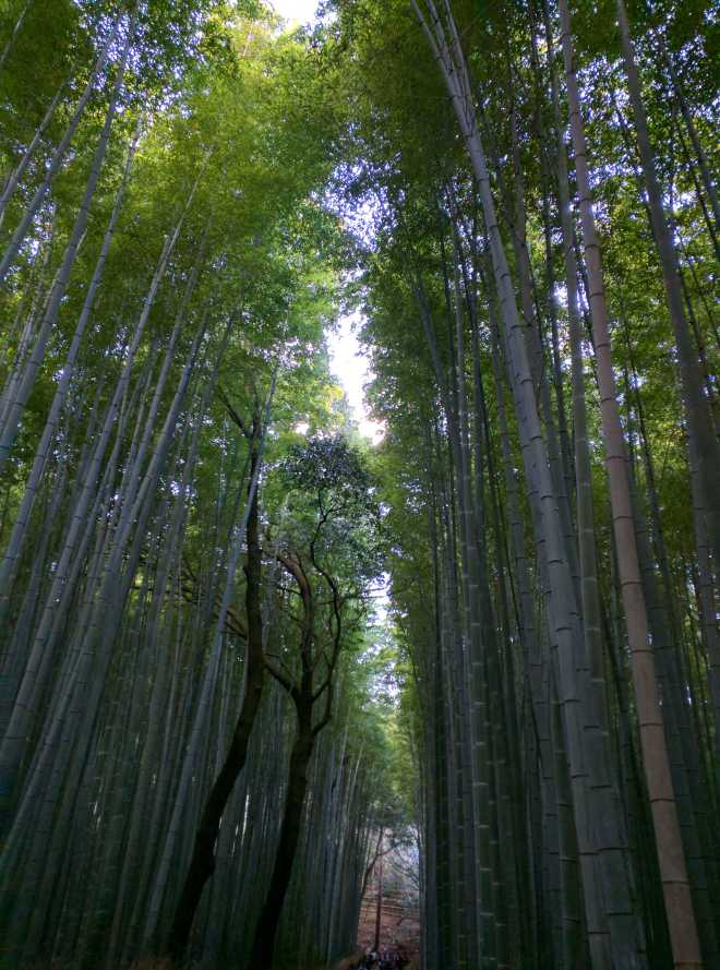 Kyoto, Part 2, Bamboo Forest - 7
