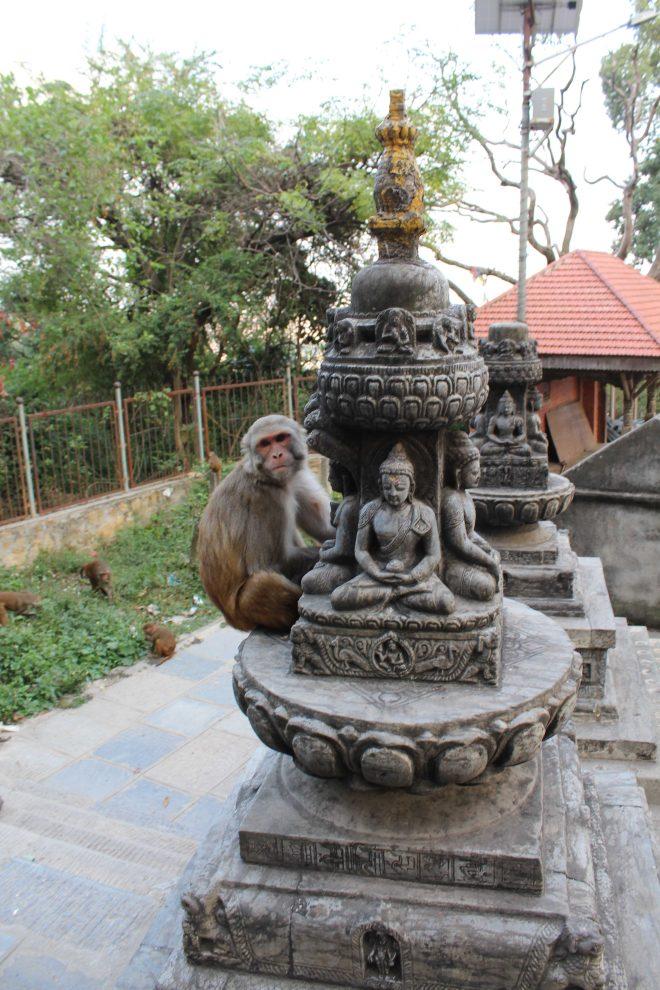 Kathmandu 1, Swayambhunath - 7