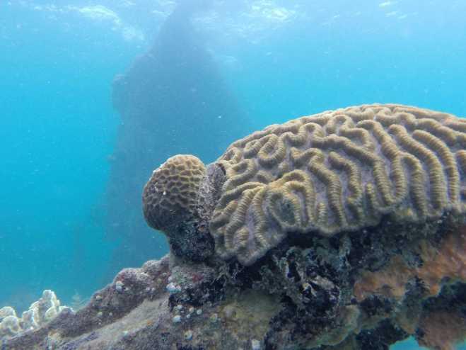 Coron, Shipwreck Diving - 7