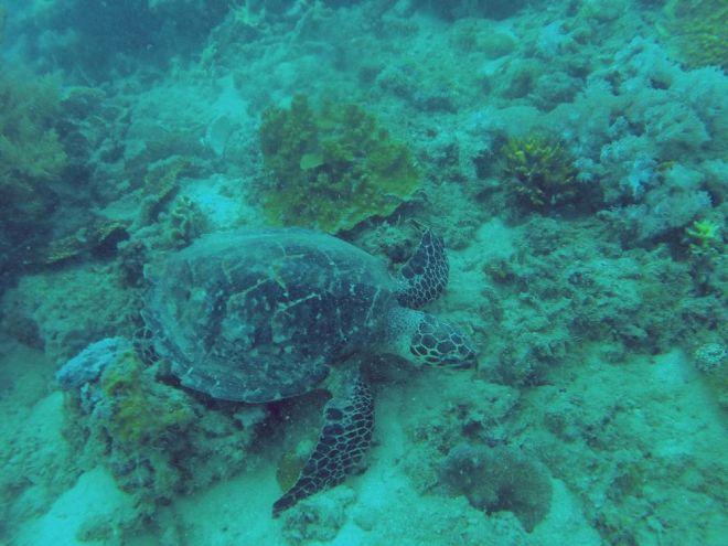 Coron, Shipwreck Diving – 8