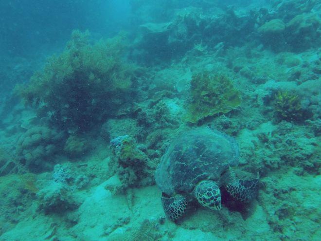 Coron, Shipwreck Diving – 9