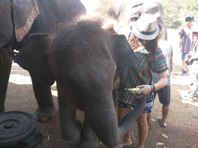 Chiang Mai - 5