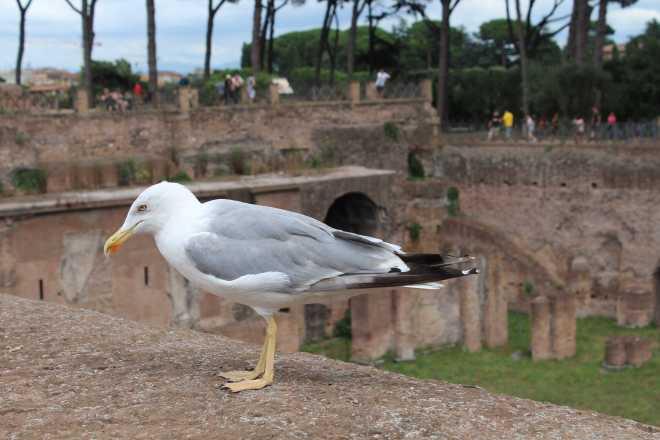 Rome, Palatine Hill - 7