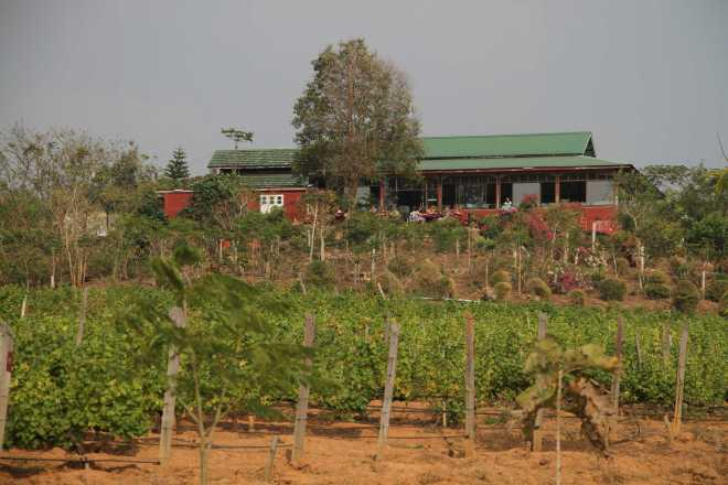 Nyaungshwe, Winery - 1