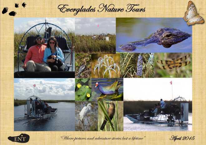 Everglades - 15