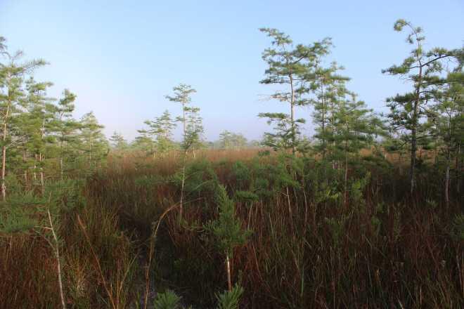 Everglades - 2