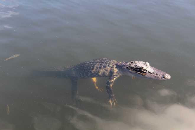 Everglades - 6