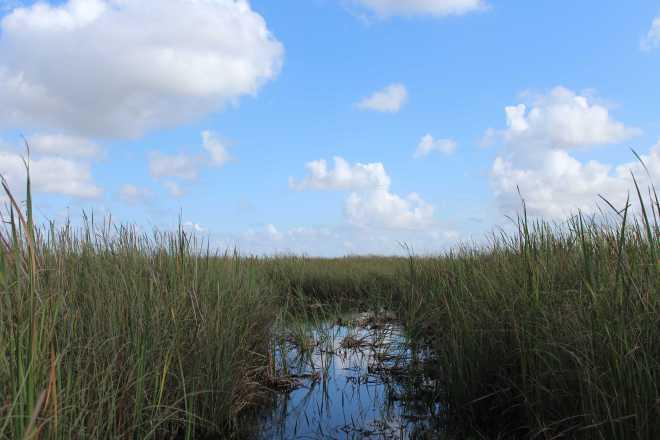 Everglades - 7