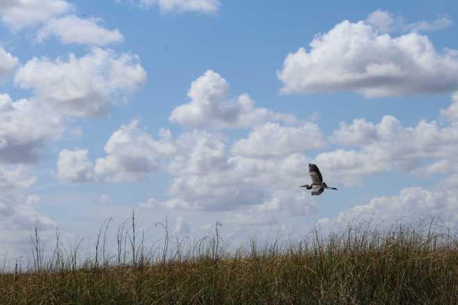 Everglades - 9