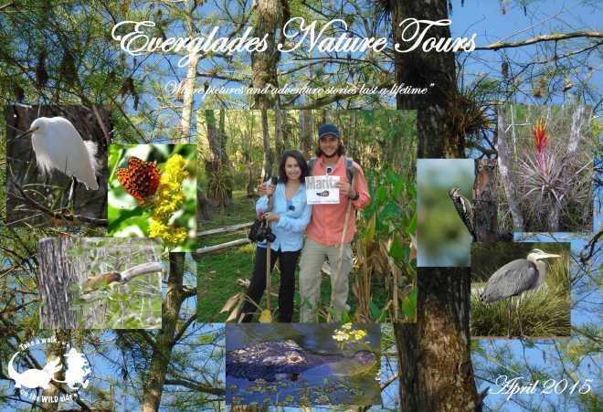 Everglades - 1