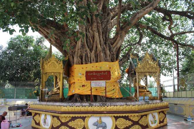 Yangon, Shwedagon Pagoda - 2