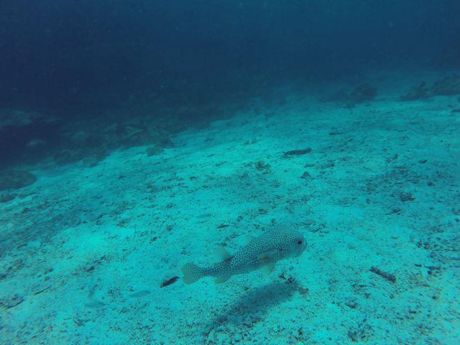 Andaman Sea, Ko Lanta - 11